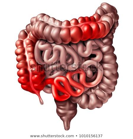 двоеточие · большой · кишечник · более · иллюстрация · пищеварительная · система - Сток-фото © lightsource