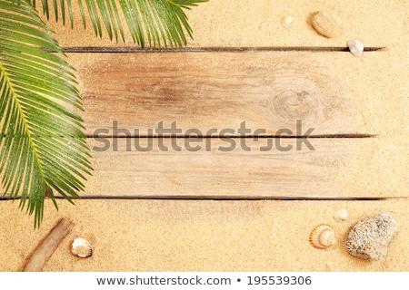Homok tengerpart kagylók kövek copy space felső Stock fotó © ThreeArt