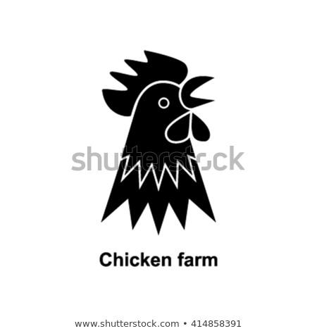 Horoz yalıtılmış kuş çiftlik horoz tavuk Stok fotoğraf © MaryValery