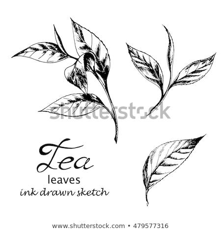 インク · スケッチ · 葉 · スタイル · 図面 · ツリー - ストックフォト © cidepix