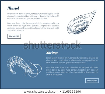 Mussel and Shrimp Vector Double Color Graphic Stock photo © robuart