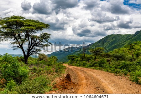 Scene with bumpy road in the park Stock photo © colematt