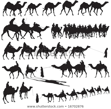 camello · icono · silueta · diseno · símbolo - foto stock © netkov1
