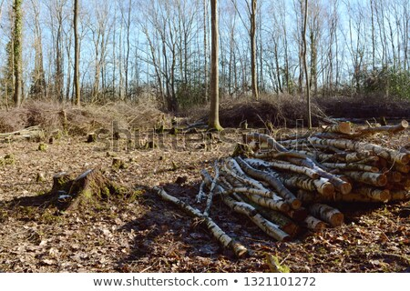 Coppiced clearing in woodland with piles of logs and branches Stock photo © sarahdoow