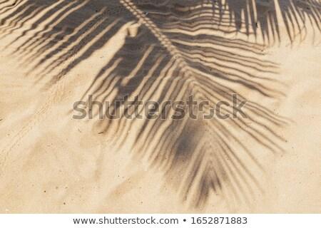 palmbladeren · idyllisch · strand · boom · zanderig - stockfoto © mythja
