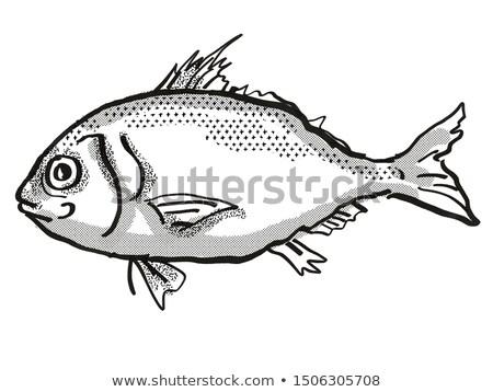 Australisch vis cartoon retro tekening stijl Stockfoto © patrimonio
