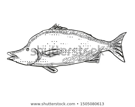 Giant Boarfish New Zealand Fish Cartoon Retro Drawing Stock photo © patrimonio