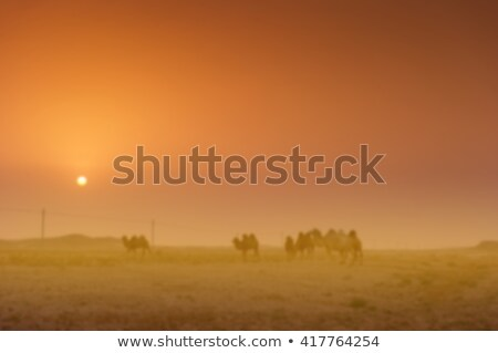 Camel travelers in the sand desert Stock photo © liolle