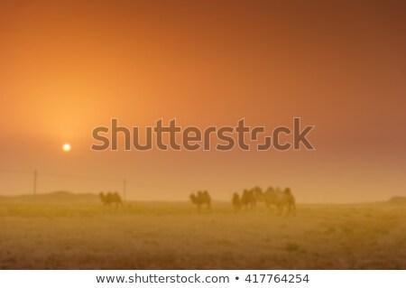 Teve homok sivatag karaván éjszaka csillagos ég Stock fotó © liolle