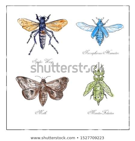 Aranha vespa besouro vintage coleção Foto stock © patrimonio