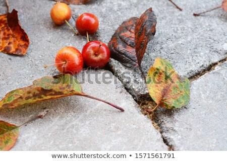 Vermelho caranguejo maçã frutas pedra Foto stock © sarahdoow