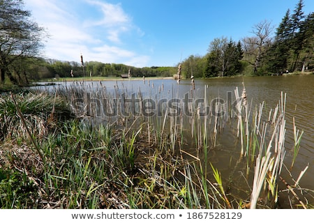 rural scenery near waldenburg stock photo © prill