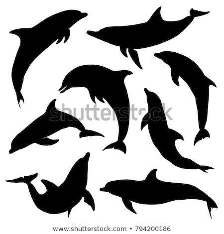 vector silhouette dolphin on white background stock photo © basel101658