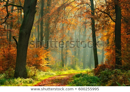 Deciduous forest in autumn, winding road. Stock photo © justinb