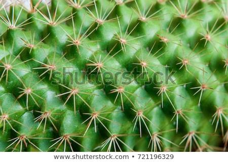 cascalho · planta · pormenor · grande · homem · indústria - foto stock © smithore