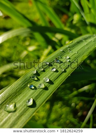 raindrops in green blurry back Stock photo © prill