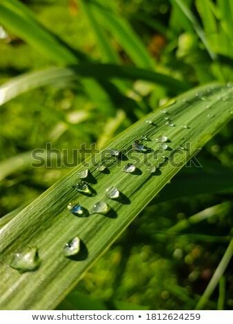 raindrops in green blurry back stock photo © prill