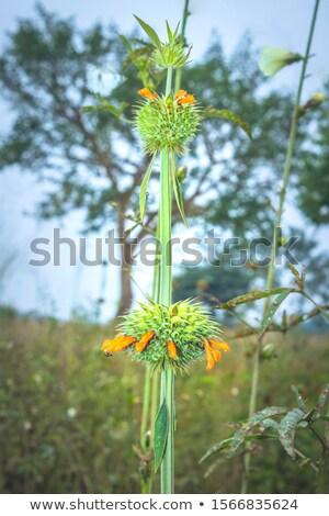 cannabis plant in uganda stock photo © prill