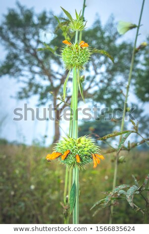 Hennep plant Oeganda zonnige verlicht detail Stockfoto © prill