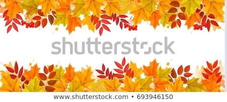 ősz keret izolált fehér fa nap Stock fotó © adamson
