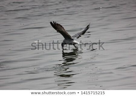 Zeemeeuw profiel sluiten centrum super naar Stockfoto © bobkeenan
