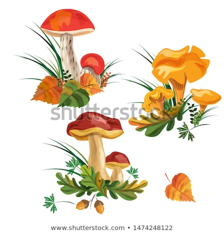 három · ehető · gomba · étel · szépség · narancs - stock fotó © zhekos