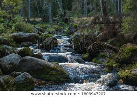small waterfall stock photo © ozaiachin