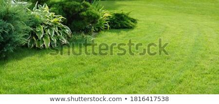 Stok fotoğraf: Manicured Yard