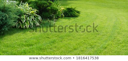 Manicured Yard Stock photo © fotomine