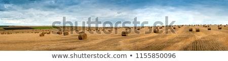 paille · domaine · récolte · Pologne · ciel · alimentaire - photo stock © monticelllo