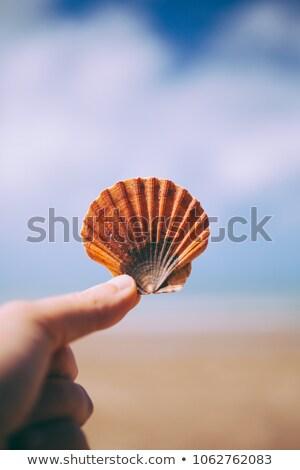 Hand Holding Seashells Stock photo © ArenaCreative