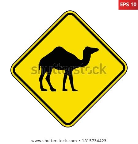 beware camels stock photo © hofmeester