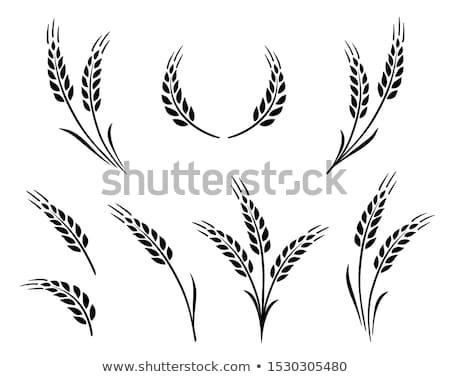 Olgun buğday gıda yaz alan ekmek Stok fotoğraf © inaquim