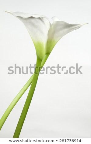 два · желтый · Лилия · изолированный · белый · цветок - Сток-фото © ajn