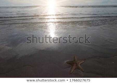 starfish · mentir · sable · plage · nature · fond - photo stock © feedough