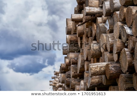 Timber Wood Logging Industry Lumber Raw Logs Stacked Stock photo © cboswell