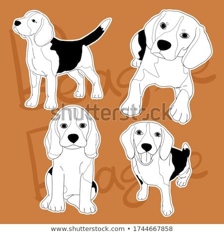 Beagle · лапа · Cute · молодые · щенков · собака - Сток-фото © silense
