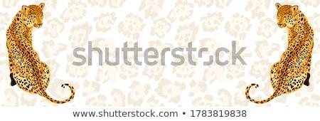 Cheetah frames stock photo © markbeckwith