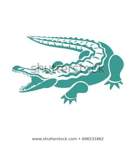 Grande americano crocodilo abrir boca isolado Foto stock © OleksandrO