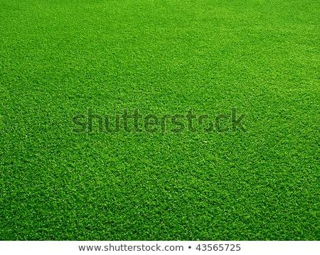 perfect · groen · gras · golf · veld · berg · schemering - stockfoto © witthaya