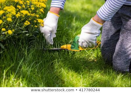 Giardino lavoro primavera impianti crescita casa Foto d'archivio © ozgur