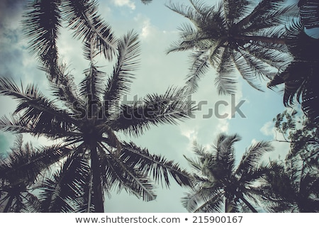 Foto d'archivio: Branches Of Palms Under Blue Sky