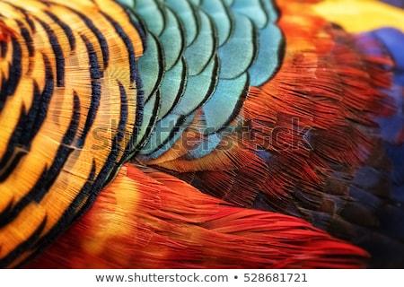 Naranja gallina retrato directamente mirando superficial Foto stock © FOTOYOU
