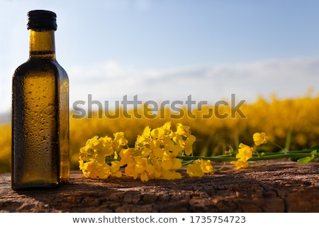 mustard with oil and flower stock photo © bdspn