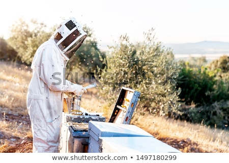 Beekeeper workind on beehvies Stock photo © jordanrusev
