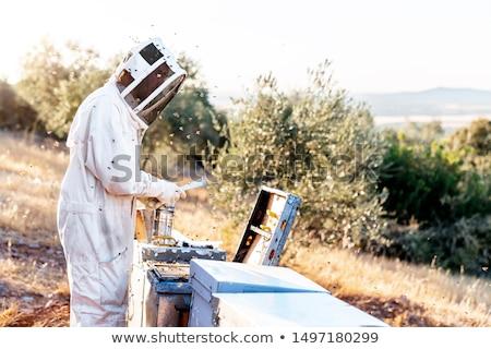 Beekeeper workind on beehvies stock photo © jordanrusev