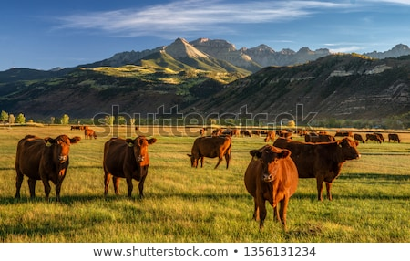 коричневый скота гор Сток-фото © meinzahn