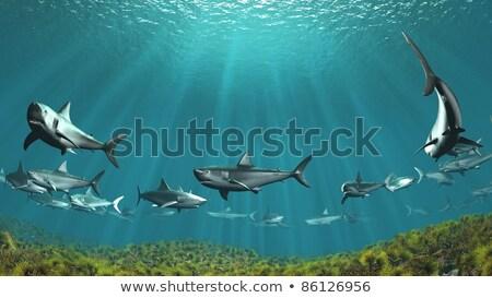 3D vízalatti jelenet cápák 3d render tájkép Stock fotó © kjpargeter