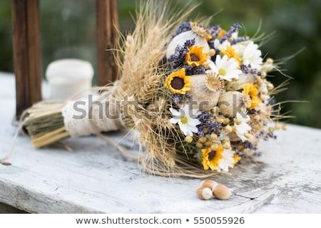 makro · organik · kurutulmuş · kişniş · tohumları - stok fotoğraf © gigra