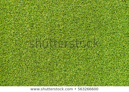 поддельный трава теннис текстуры спорт футбола Сток-фото © tetkoren